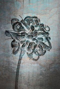 Goudsbloem - Calendula officinalis van Christophe Fruyt