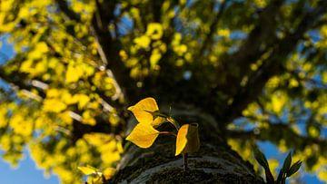 nieuw leven aan de boom van Barry van Rijswijk