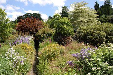 Tuin met smal pad door de beplanting von Susan Dekker