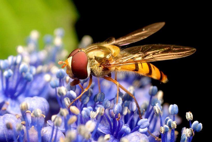 Snacking of Nectar van Marlies Prieckaerts