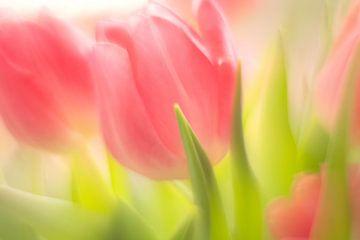 Tulpen van Janny Kleijn
