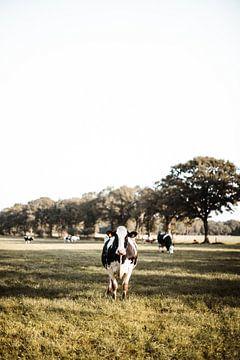 Kühe auf der Wiese in einer Herbstlandschaft von Holly Klein Oonk