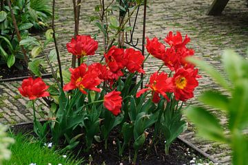 tulpen in perk von Robert Lotman