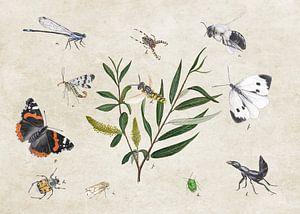 Schietwilg met insecten
