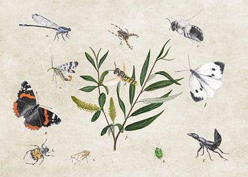 Weisse Weide mit Insekten von Jasper de Ruiter