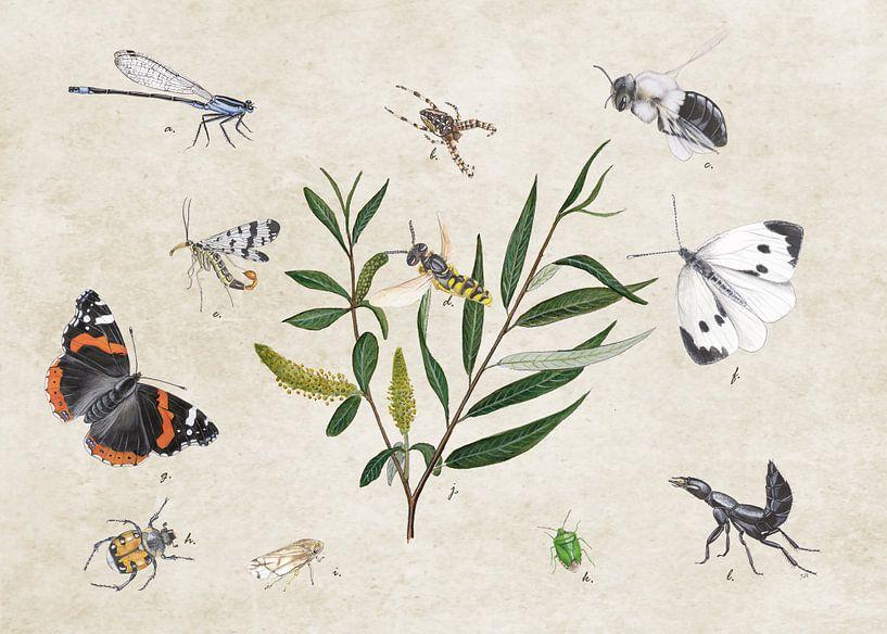 Schietwilg met insecten van Jasper de Ruiter