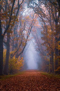 Mysteriöser Wald von Julius Pot