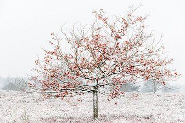 Boom in de sneeuw van Inge Heeringa