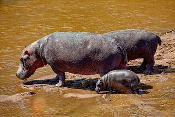 Nijlpaarden van Peter Michel