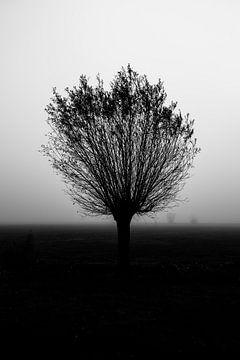 Een knotwilg in de mist von Peter Bouwknegt
