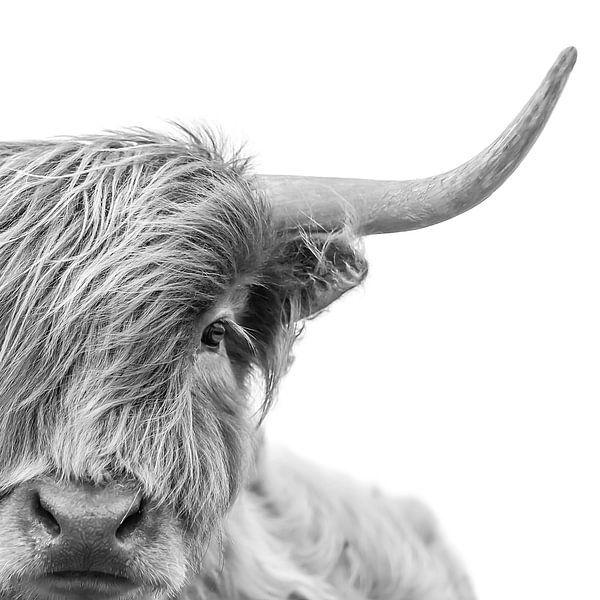 Portret Foto Schotse Hooglander Zwart-wit van Diana van Tankeren