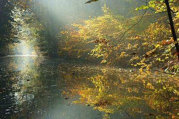 Herfst in het bos sur Michel van Kooten