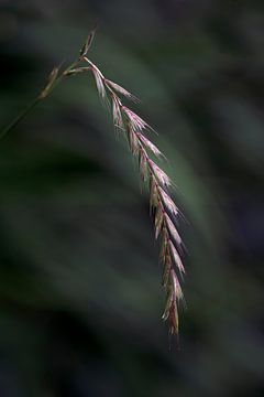 Gras von Mario de Lijser