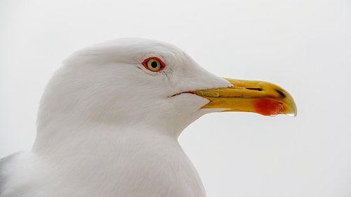 Close-up van een zeemeeuw