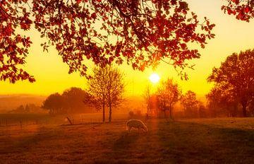 Sonnenaufgang auf einfachem Feld von John Kreukniet