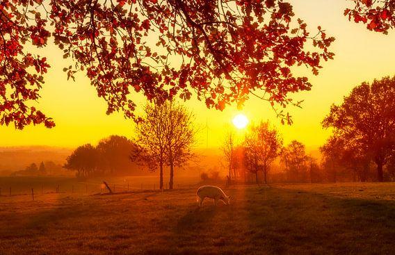 Zonsopgang in Simpelveld