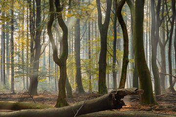Een sterke lichtstraal in het bos op een mistige vroege ochtend van Anges van der Logt