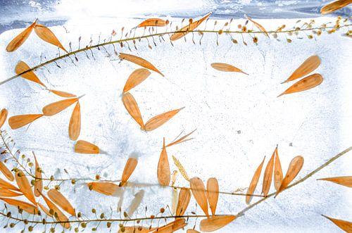 Frozen Flower Petals - Bevroren Bloesem Oranje en Blauw van