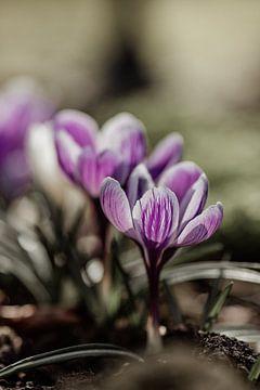 Endlich Frühling von Tessa Dommerholt