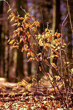Golden leaves van