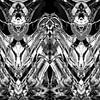 BLACK & WHITE CURIOSITY  van Pia Schneider thumbnail