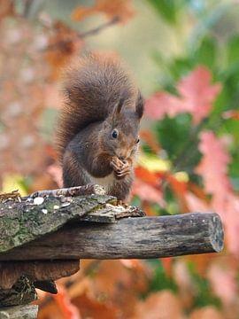 Eichhörnchen von Loek Lobel