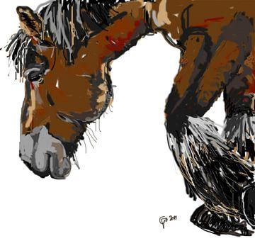 Paard Guus van Go van Kampen