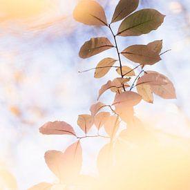 Gorgeous light van Bob Daalder