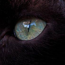 Het oog van een zwarte kat van Eye to Eye Xperience By Mris & Fred