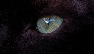 Het oog van een zwarte kat von Eye to Eye Xperience By Mris & Fred