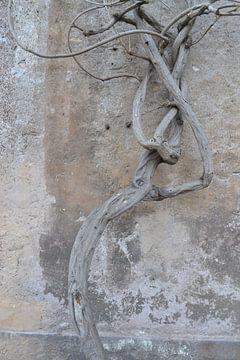 Un albero a Roma van Laura Luca