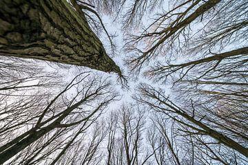 Aan de toppen van de bomen von Marcel Derweduwen