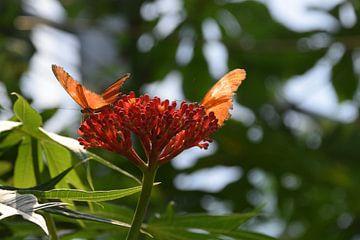 Vlinder op een bloem von Marjolijn van Calker