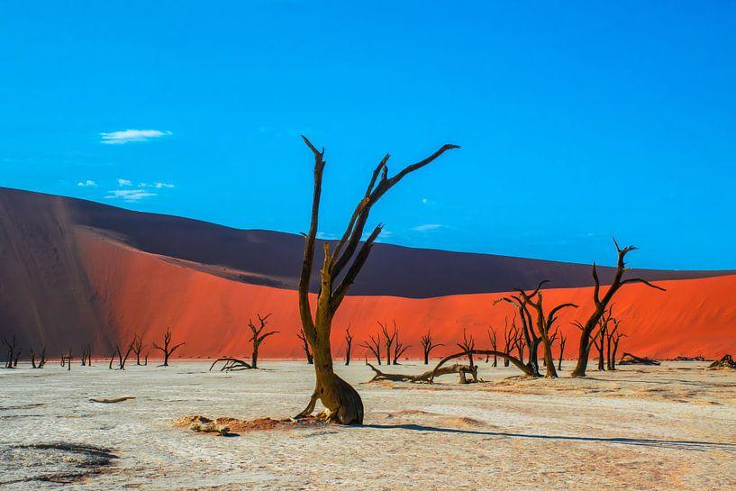 Bomen in de Dode Vallei in Namibië van Rietje Bulthuis