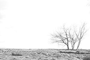 Bomen in het zand van Dion de Bakker