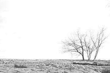 Bäume im Sand
