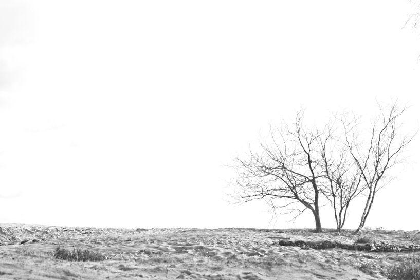 Des arbres dans le sable sur Dion de Bakker