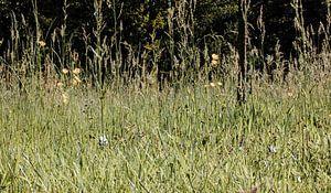Grasland met boterbloemen. van Margreet van Tricht
