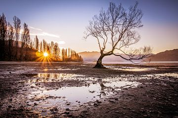 Wanaka tree in winter van Arno Steeman