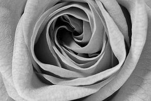 On Rosepetals van