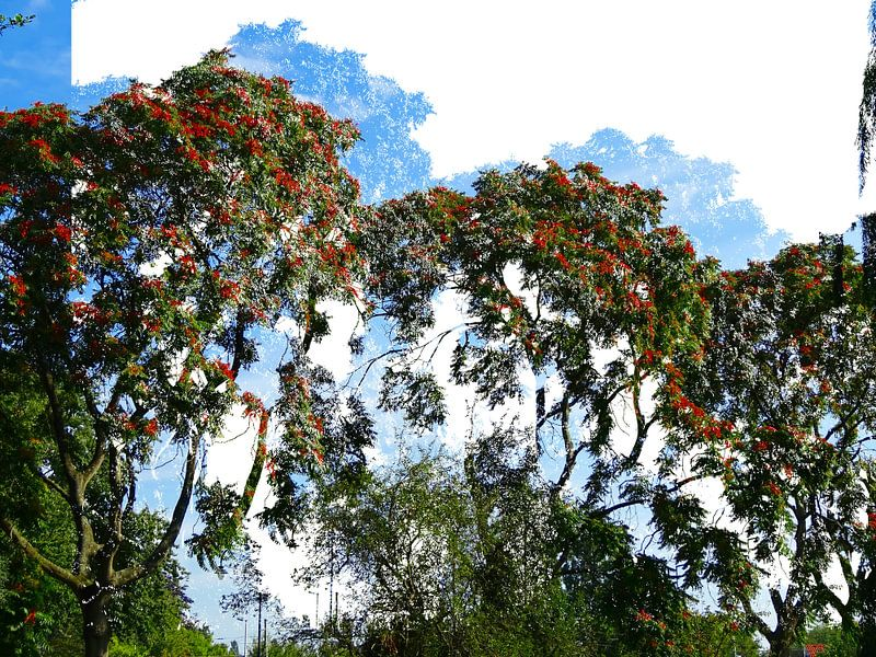 Tree Magic 45 van MoArt (Maurice Heuts)