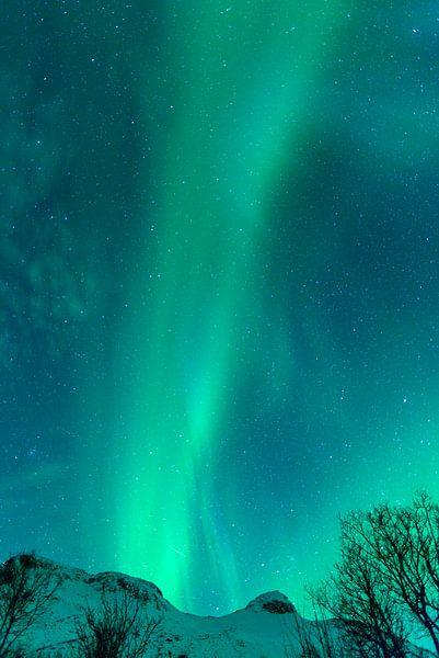 Noorderlicht boven de Lofoten in Noorwegen van Sjoerd van der Wal