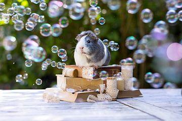 Bubble Party sur Marloes van Antwerpen