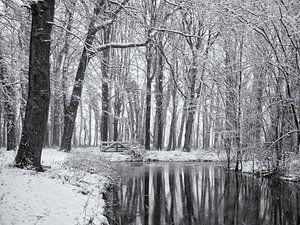Weerspiegeling besneeuwde bomen