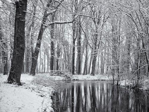 Weerspiegeling besneeuwde bomen van