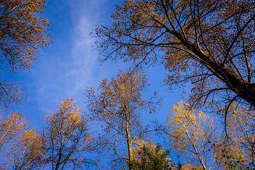 Himmelhoher imposanter Baum von Urban Photo Lab