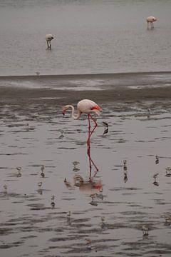 Weerspiegelingen van een flamingo von Erna Haarsma-Hoogterp