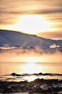 Finden Sie der Seehund von Elisa in Iceland
