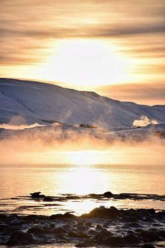 Zoek de zeehond van Elisa in Iceland