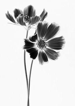 Schwarzer Kosmos Liebe von Christl Deckx